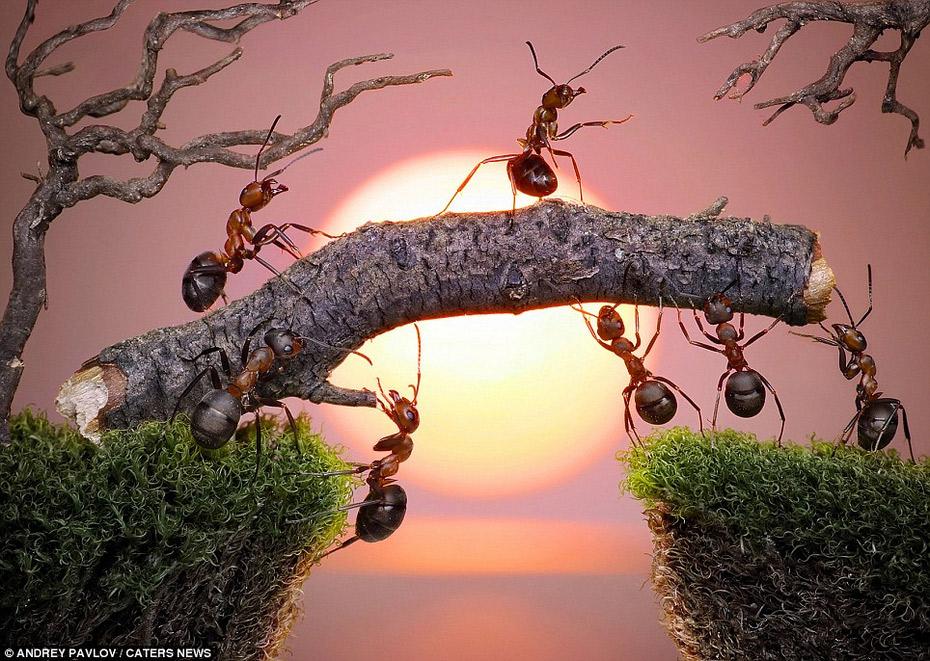 蚂蚁的童话生活(创意摄影)