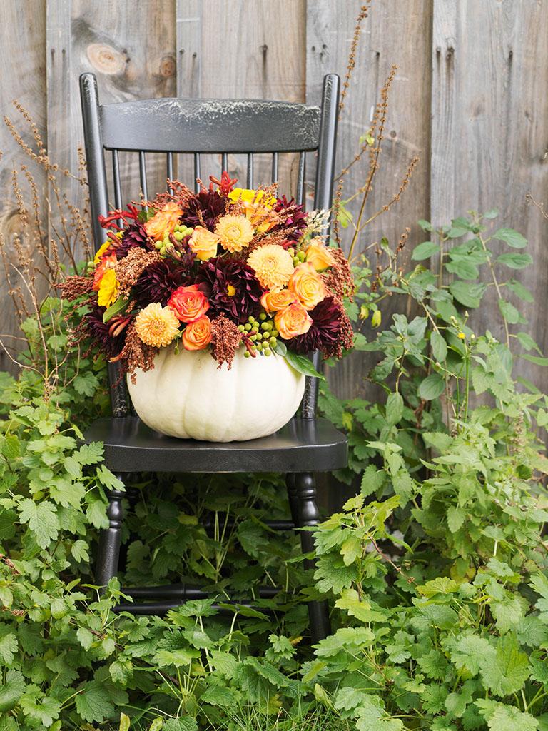 秋花,南瓜,花园椅